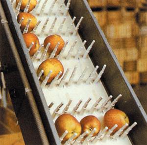 Băng tải nghành chế biến rau củ quả